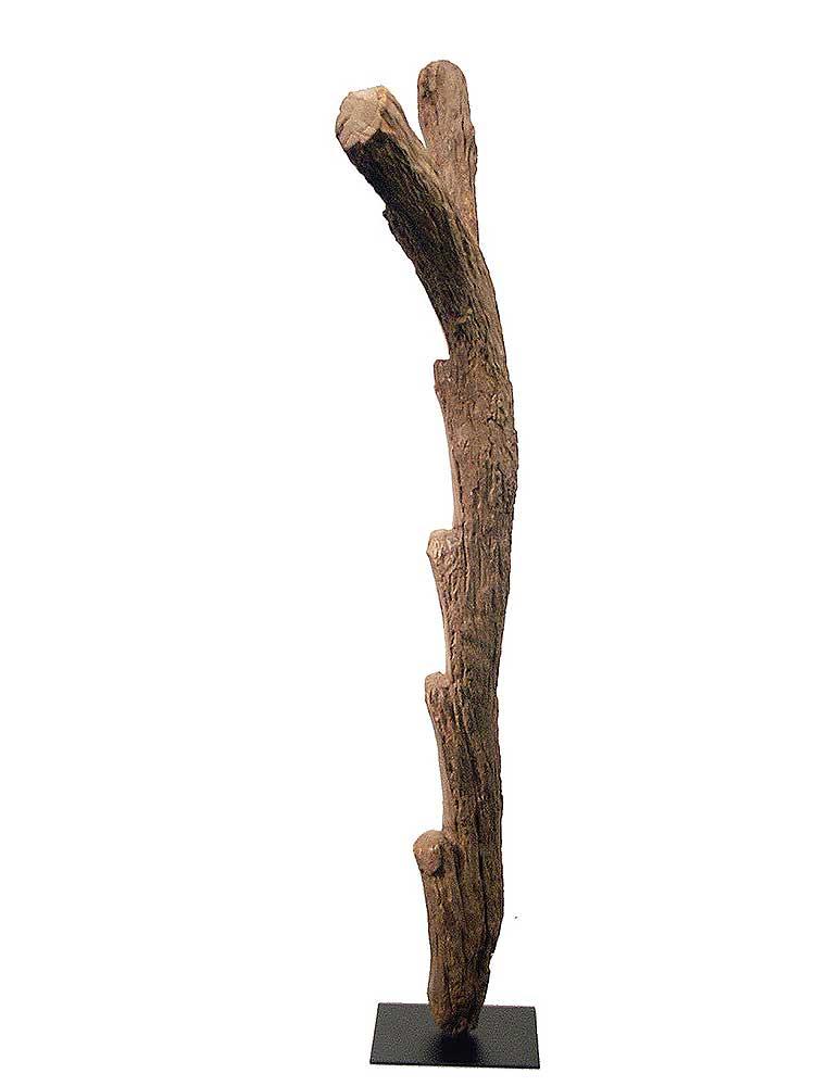 dogonladder05b9