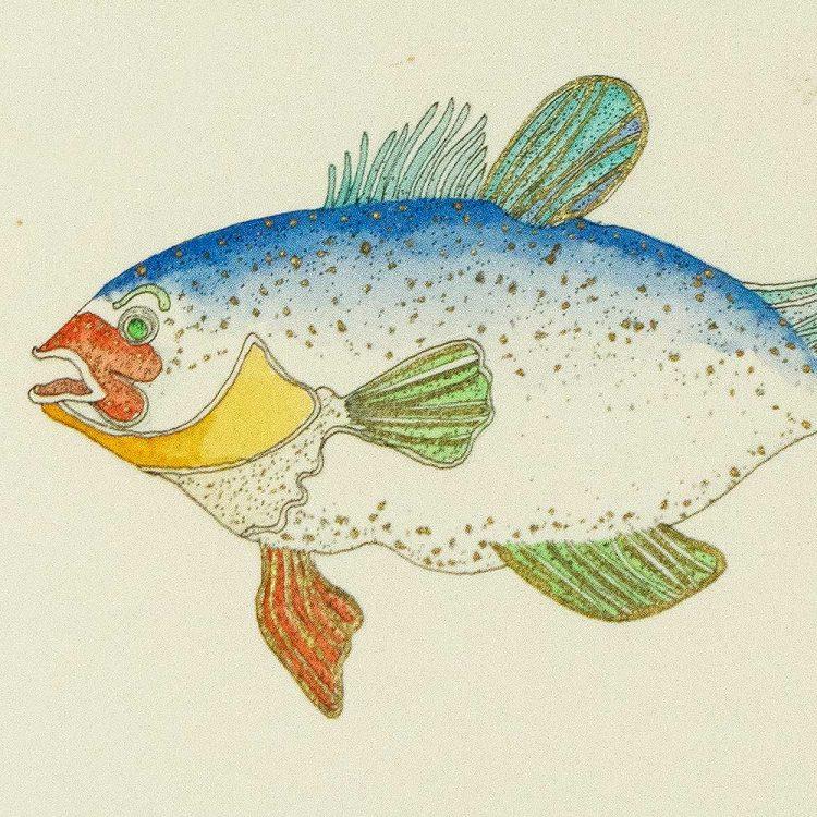 reedfishsmalldetailsquare