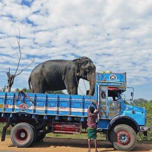 elephanttruck